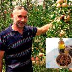Ekološko pridelano sadje, prodaja ekološkega sadja, ekološko pridelana jabolka - viktor pavlič 002