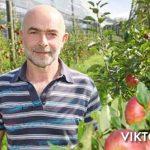 Ekološko pridelano sadje, prodaja ekološkega sadja, ekološko pridelana jabolka - viktor pavlič 006