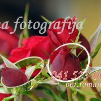 poročna fotografija 100