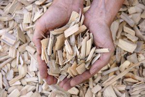 Proizvodnja in prevoz sekancev, strojna sečnja, odkup in spravilo lesa 001