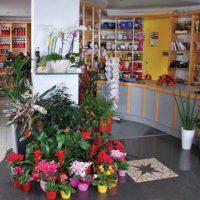 Cvetličarna Pori - 1582204870