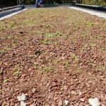 Sandi Lupša Zelene strehe