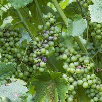 Steklenice za vino, steklenice za pivo, steklenice za žgane pijače, steklenice Slovenija 002
