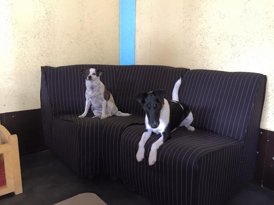 Pasji hotel, hotel za pse 101