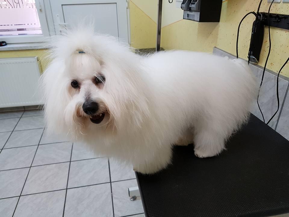 Pasji salon, striženje psov, Jesenice, ŠVRK 100