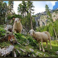 Domače živali - 1580130820