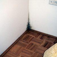 Zidna plesen v stanovanju - 1556269093