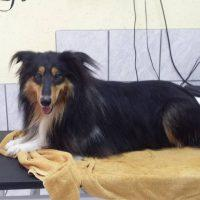 Pasji salon, striženje psov, Jesenice - Švrk 003