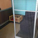 Pasji hotel, hotel za pse 008
