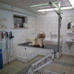 Striženje psov, Maribor - TAČKA salon za nego malih živali 005