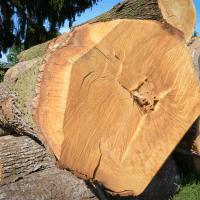 LGZ, lesno gozdarska zadruga, prodaja rezanega lesa, odkup in prodaja hlodovine, izdelovanje lesnih izdelkov, razrez, sušenje, odvoz lesa, Strah, Apače DSC_9165--logo