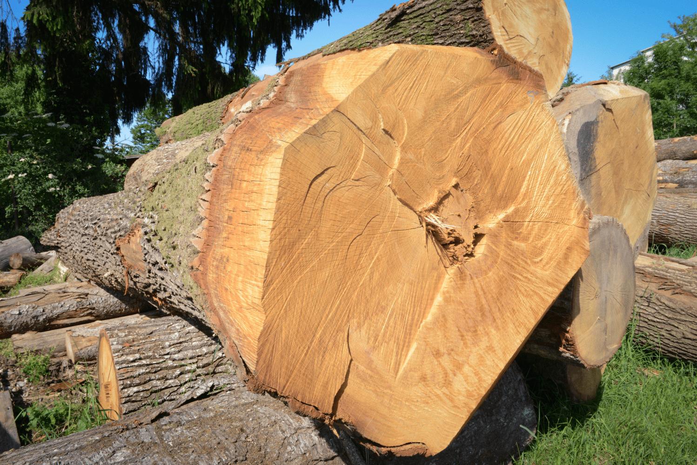 LGZ, lesno gozdarska zadruga, prodaja rezanega lesa, odkup in prodaja hlodovine, izdelovanje lesnih izdelkov, razrez, sušenje, odvoz lesa, Strah, Apače DSC_9165