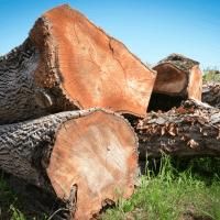 LGZ, lesno gozdarska zadruga, prodaja rezanega lesa, odkup in prodaja hlodovine, izdelovanje lesnih izdelkov, razrez, sušenje, odvoz lesa, Strah, Apače DSC_9175--logo