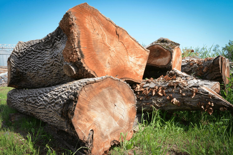 LGZ, lesno gozdarska zadruga, prodaja rezanega lesa, odkup in prodaja hlodovine, izdelovanje lesnih izdelkov, razrez, sušenje, odvoz lesa, Strah, Apače DSC_9175