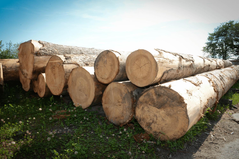 LGZ, lesno gozdarska zadruga, prodaja rezanega lesa, odkup in prodaja hlodovine, izdelovanje lesnih izdelkov, razrez, sušenje, odvoz lesa, Strah, Apače DSC_9177
