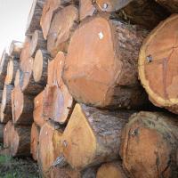 LGZ, lesno gozdarska zadruga, prodaja rezanega lesa, odkup in prodaja hlodovine, izdelovanje lesnih izdelkov, razrez, sušenje, odvoz lesa, Strah, Apače DSC_9185--logo