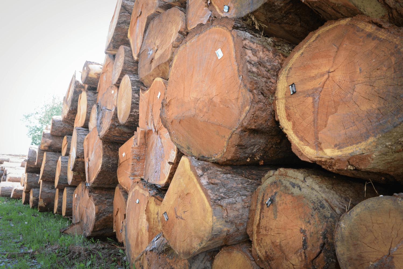 LGZ, lesno gozdarska zadruga, prodaja rezanega lesa, odkup in prodaja hlodovine, izdelovanje lesnih izdelkov, razrez, sušenje, odvoz lesa, Strah, Apače DSC_9185