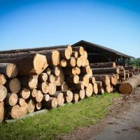 LGZ, lesno gozdarska zadruga, prodaja rezanega lesa, odkup in prodaja hlodovine, izdelovanje lesnih izdelkov, razrez, sušenje, odvoz lesa, Strah, Apače DSC_9199--logo