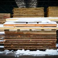 Lesno gozdarska zadruga DSC_2819--logo