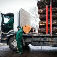Lesno gozdarska zadruga DSC_2825--logo