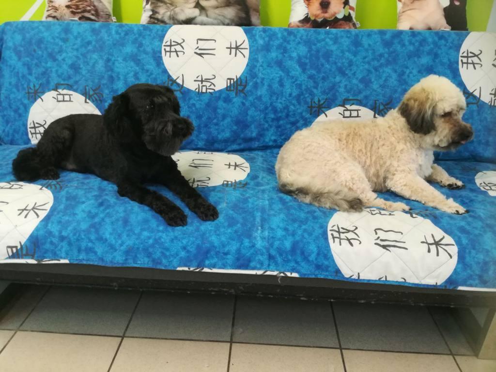 Salon za nego psov in muc Tačka - Maribor-IMG_20190525_122306