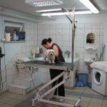 Striženje psov, Maribor - TAČKA salon za nego malih živali 031