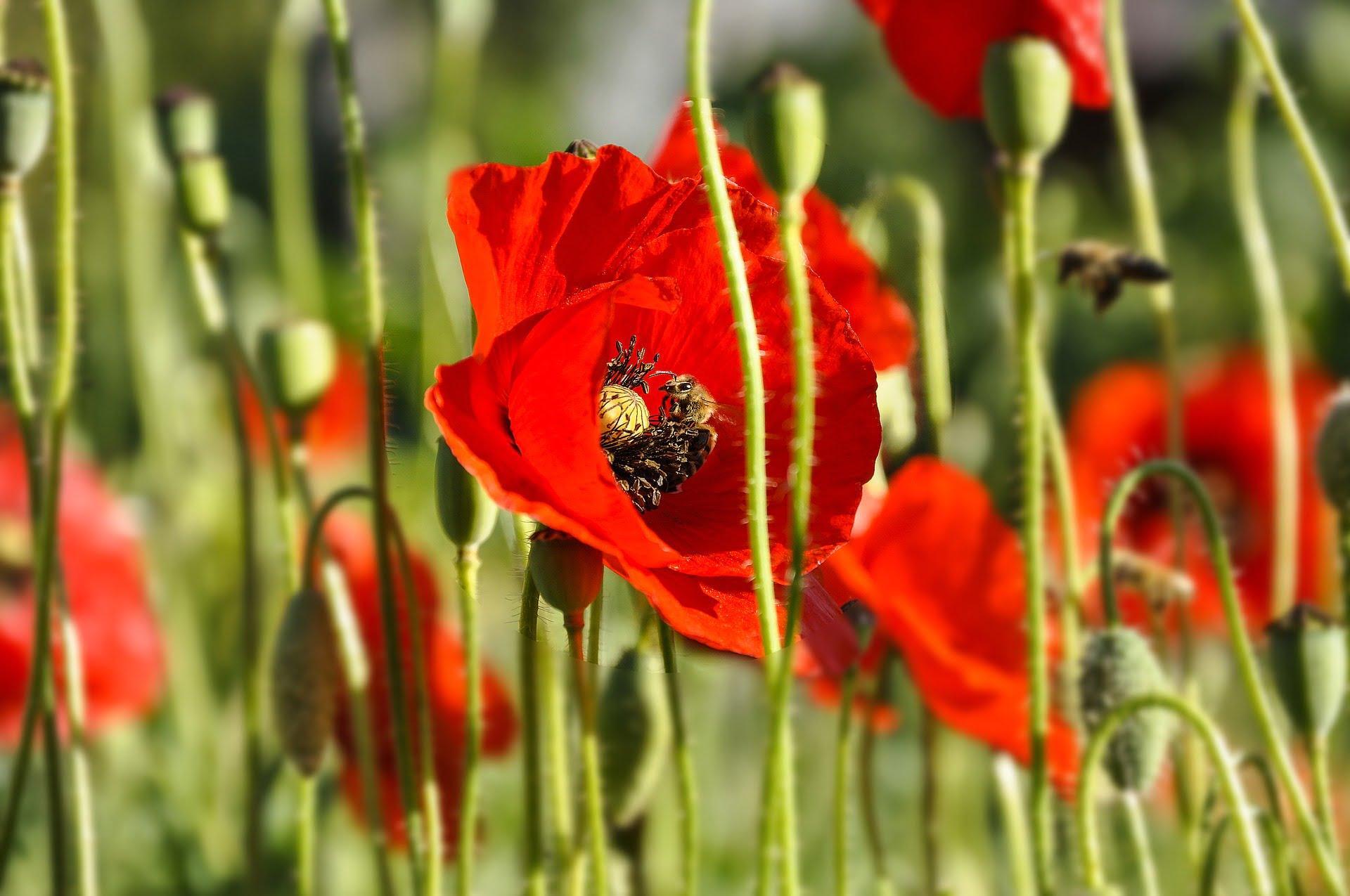 flowers-2386160_1920