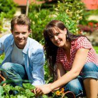 Vrtnarstvo Čolig, okrasne rastline, balkonsko cvetje, trajnice, grmovnice, Prekmurje 0002