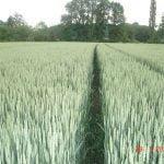 M. REBERNIK d.o.o. - Konzervirajoča obdelava tal, Kompostirna obdelava tal, Ohranitvena obdelava tal 035