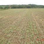 M. REBERNIK d.o.o. - Konzervirajoča obdelava tal, Kompostirna obdelava tal, Ohranitvena obdelava tal 037