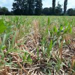 M. REBERNIK d.o.o. - Konzervirajoča obdelava tal, Kompostirna obdelava tal, Ohranitvena obdelava tal 002