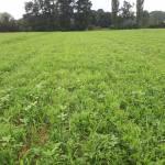 M. REBERNIK d.o.o. - Konzervirajoča obdelava tal, Kompostirna obdelava tal, Ohranitvena obdelava tal 001