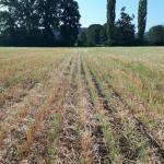 M. REBERNIK d.o.o. - Konzervirajoča obdelava tal, Kompostirna obdelava tal, Ohranitvena obdelava tal 003