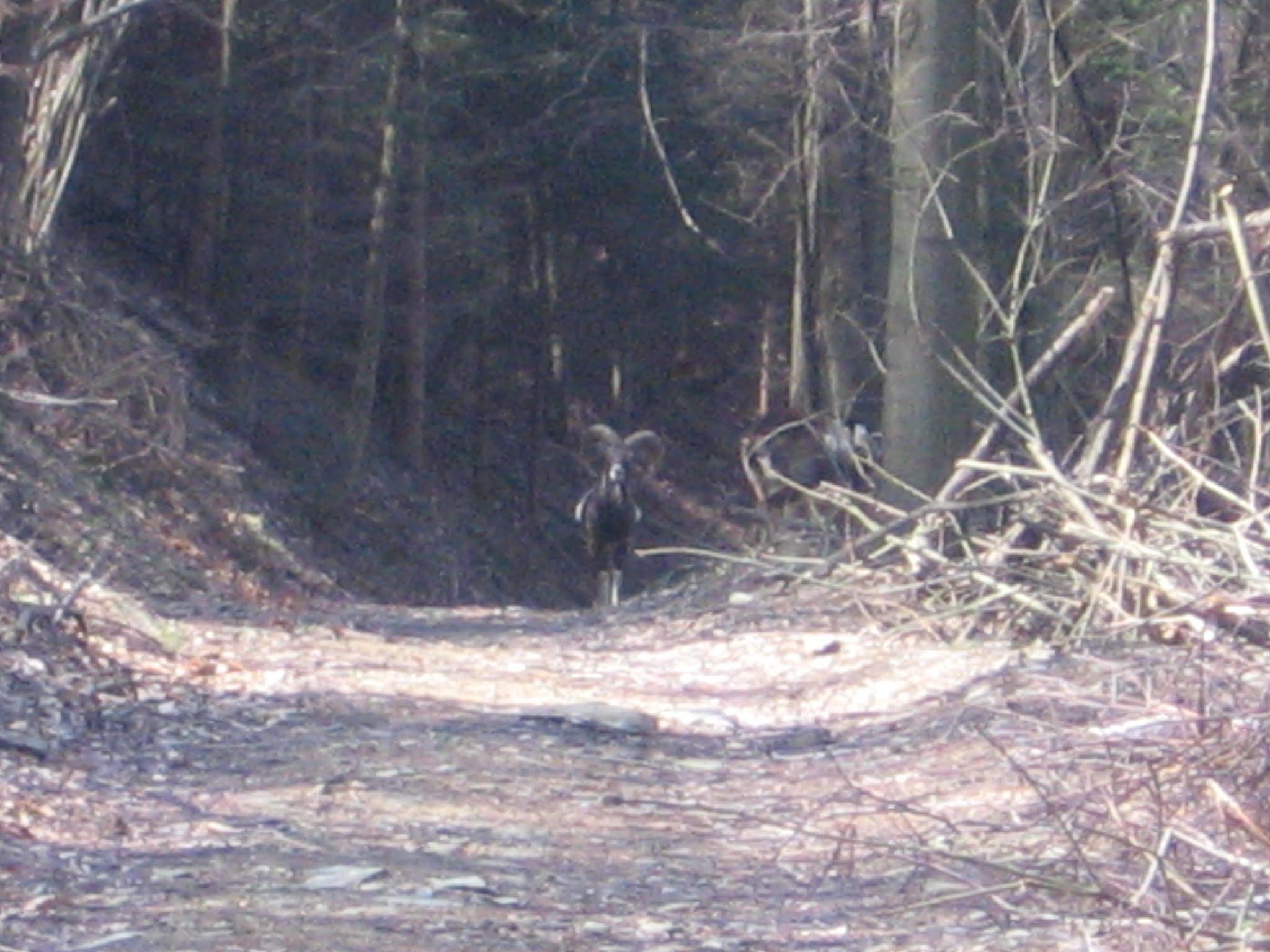 lovska druzina most na soci jaknču rut