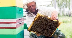 Čebelarstvo-kot-kulturna-dediščina-cebelarstvo-pislak.si